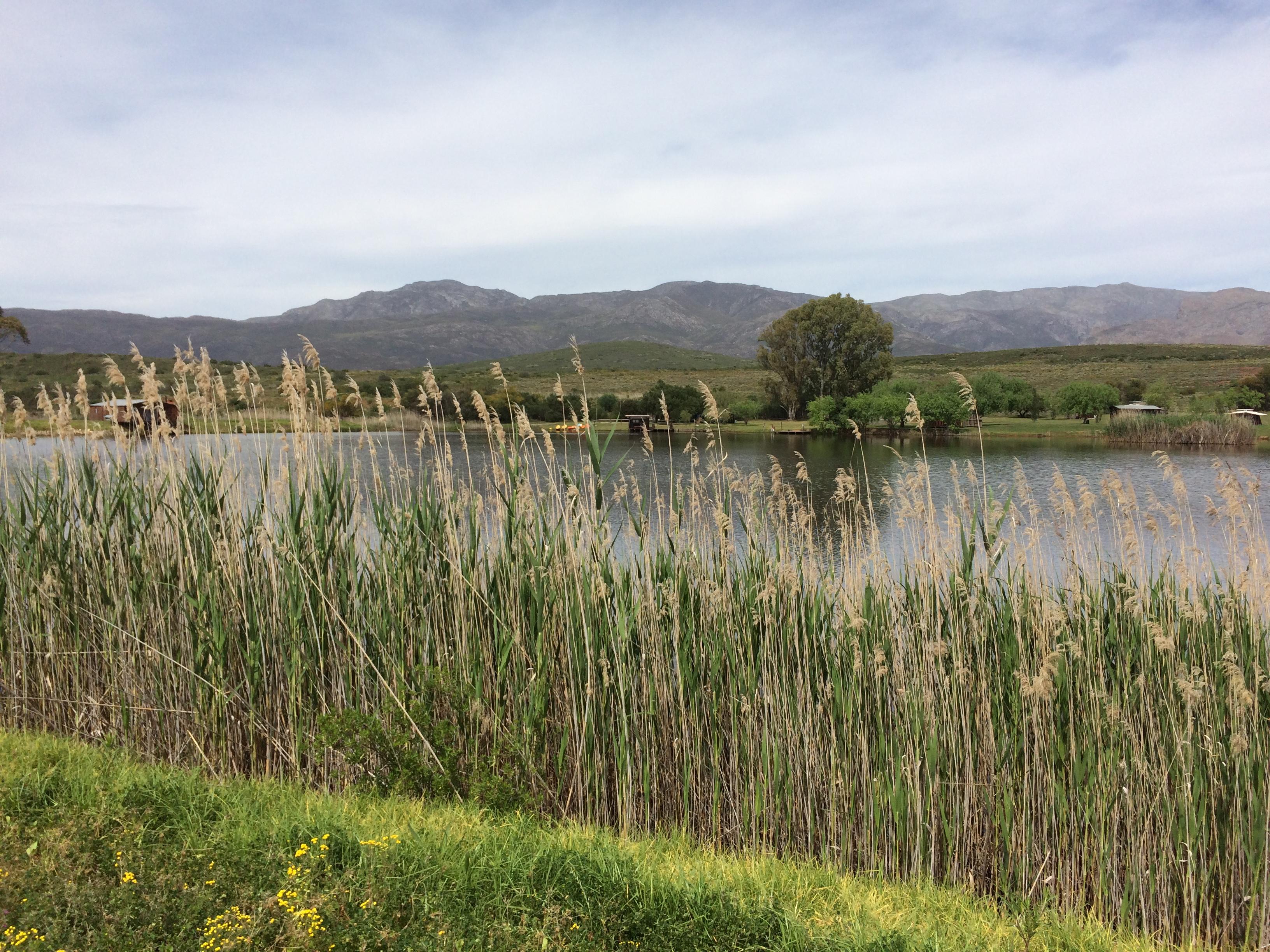 Nigh Sky Caravan Farm - Reeds