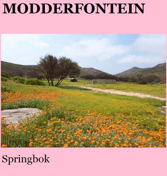 Modderfontein - Springbok