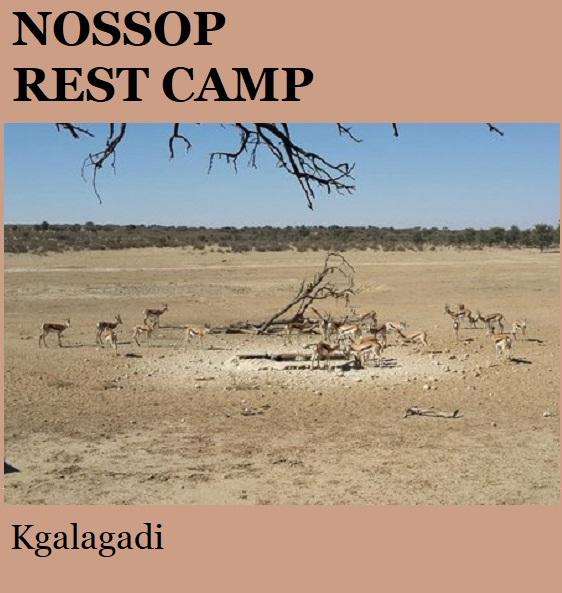 Nossob Rest Camp - Kgalagadi