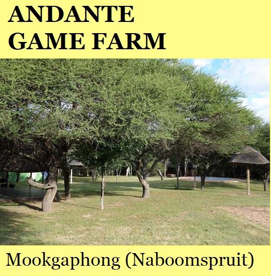 Andante Game Farm - Mookgaphong (Naboomspruit)