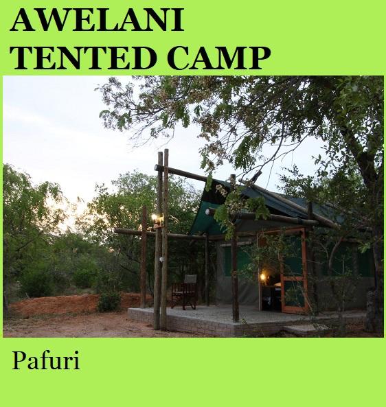 Awelani Tented Camp - Pafuri