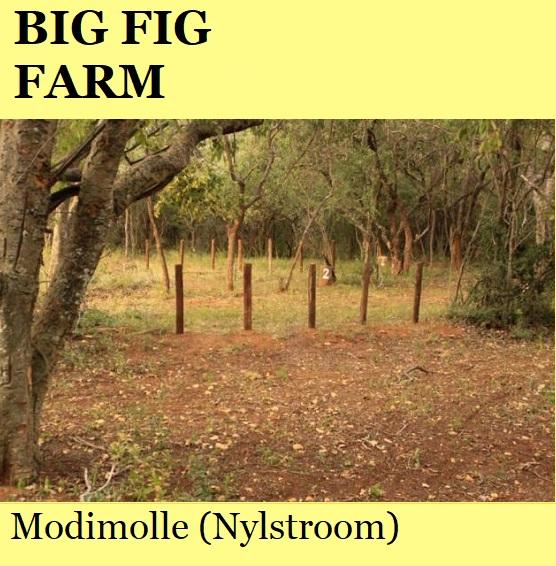 Big Fig Farm - Modimolle (Nylstroom)