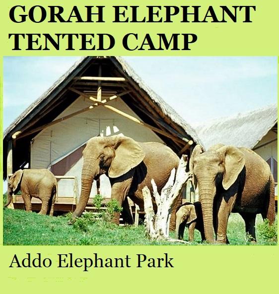 Gorah Elephant Tented Camp - Addo Elephant Park