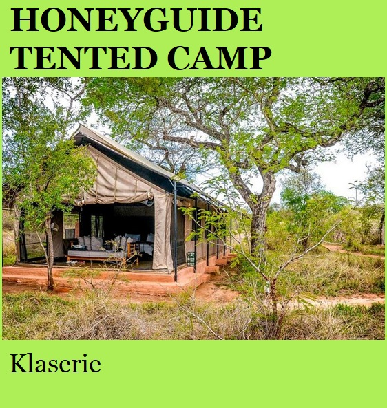 Honeyguide Tented Camp - Klaserie