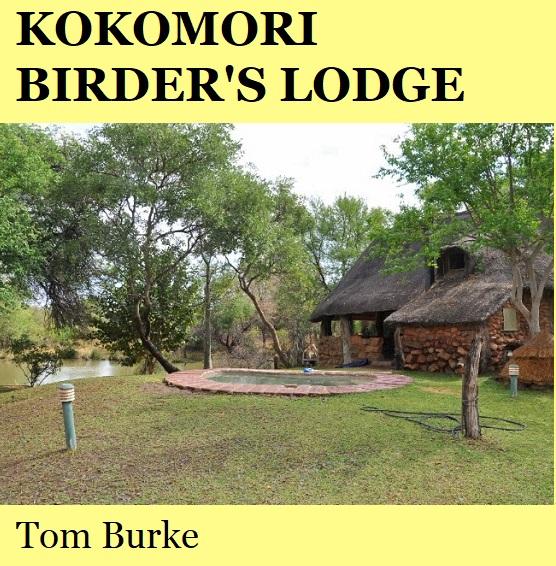 Kokomori Birders Lodge - Tom Burke