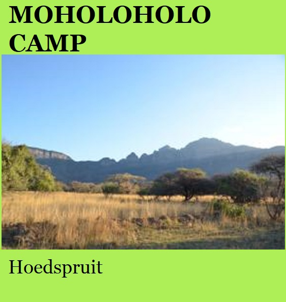 Moholoholo Camp - Hoedspruit