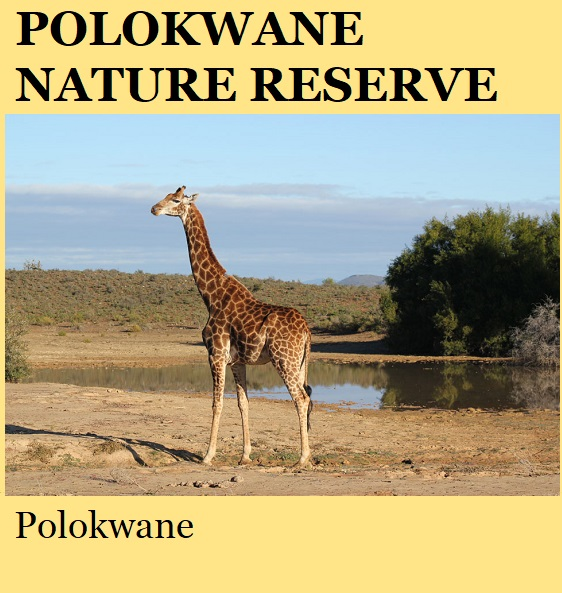 Polokwane Game Reserve - Polokwane