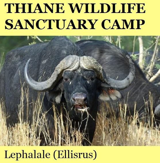 Thiane Wildlife Sanctuary Camp - Lephalale (Ellisrus)