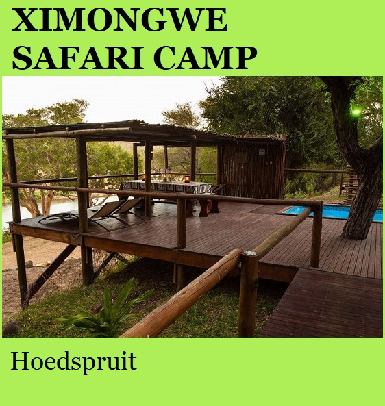 Ximongwe Safari Camp - Hoedpruit