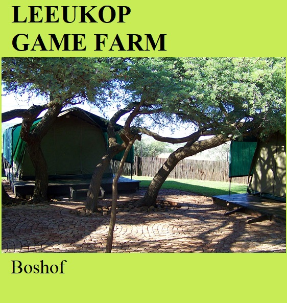 Leeukop Game Farm - Boshof