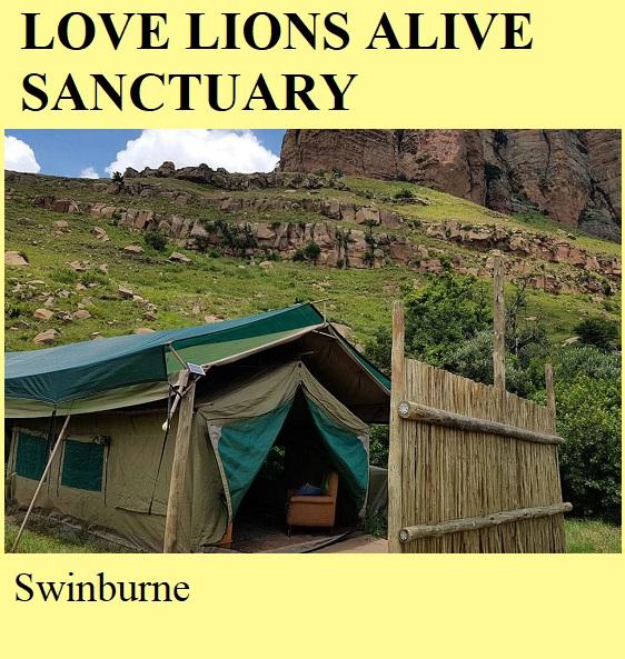 Love Lions Alive Sanctuary - Swinburne