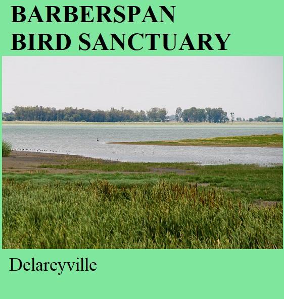 Barberspan Bird Sanctuary - Delareyville