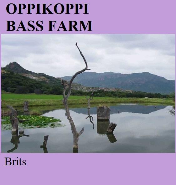 Oppikoppi Bass Farm - Brits