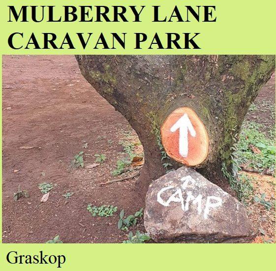 Mulberry Lane Caravan Park - Graskop