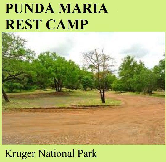 Punda Maria Rest Camp - Kruger National Park