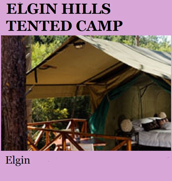 Elgin Hills Tented Camp - Elgin