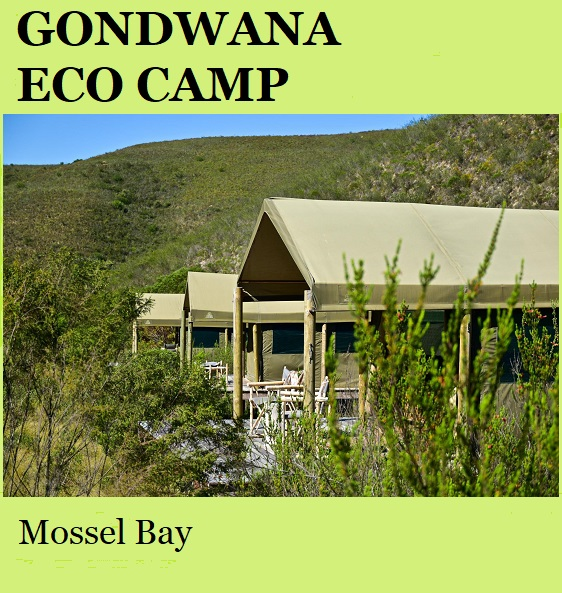 Gondwana Eco Tented Camp - Mossel Bay