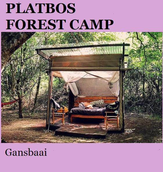 Platbos Forest Camp - Gansbaai