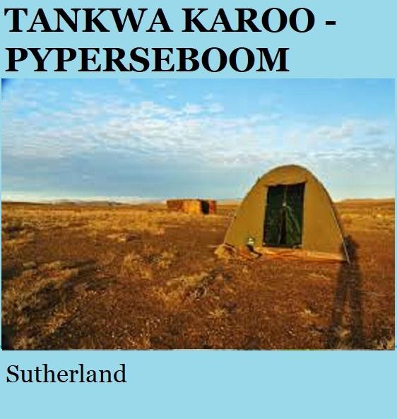 Tankwa Karoo Pyperseboom - Sutherland