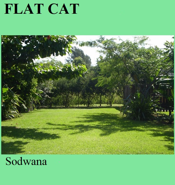 Flat Cat - Sodwana