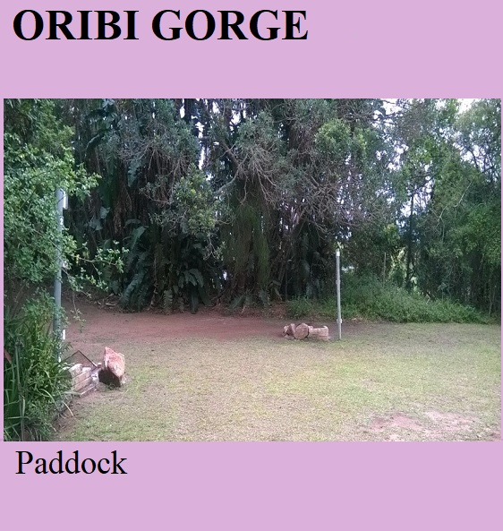 Oribi Gorge - Paddock