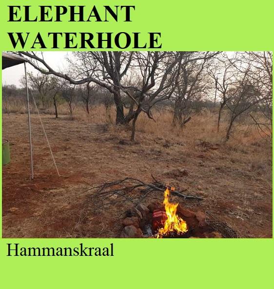 Elephant Waterhole - Hammanskraal