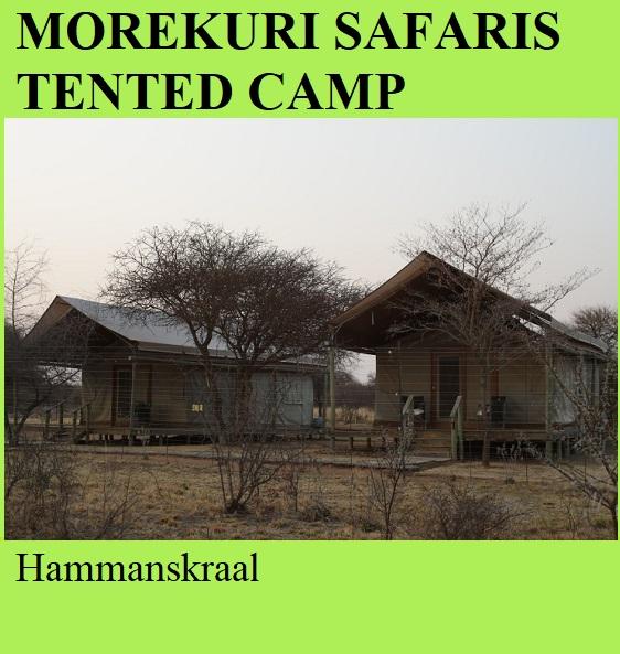 Morekuri Safaris Tented Camp - Hammanskraal